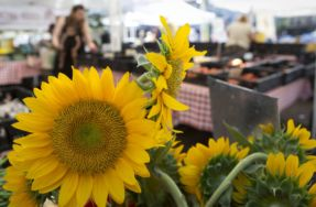 Volunteer Opportunity: Lincoln Park Farmers Market